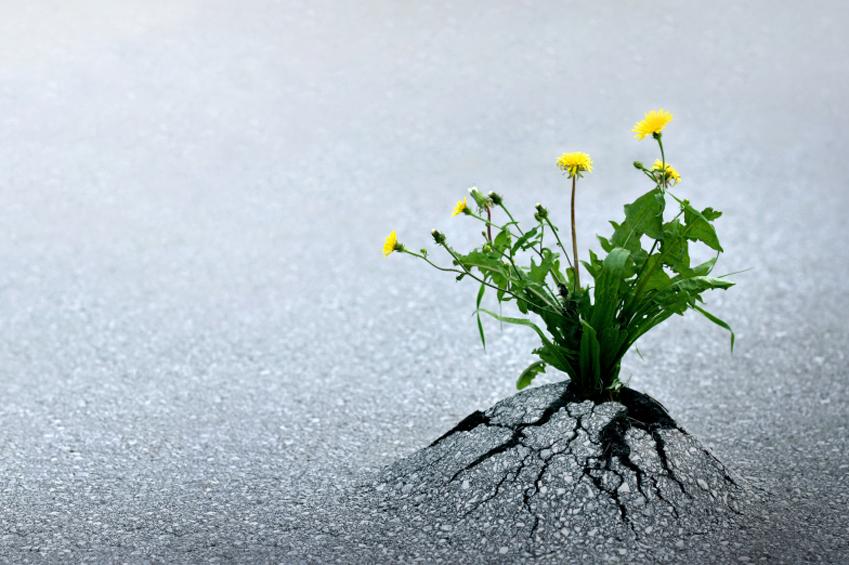 Systemische Forschungsperspektiven: Resilienz, Salutgenese und Transformation